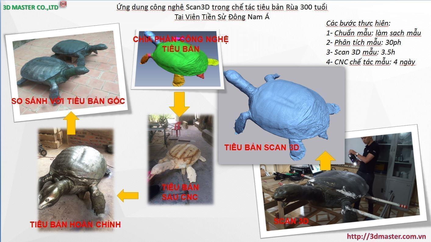 scan 3d mẫu rùa